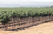 propriété viti-vinicole sarde Sella & Mosca