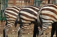 Zoosafari, Fasano