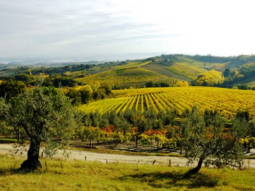 What is Chianti? Chianti hills