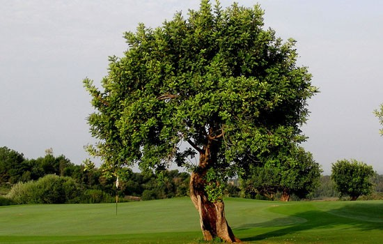 donna-fugata-golf-resort7.jpg