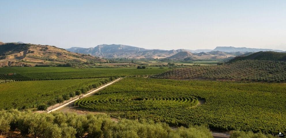 Cirò, la terra del vino