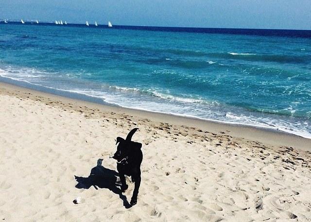 Strände Für Hunde Auf Sardinien Auf Welchen Stränden Sardiniens