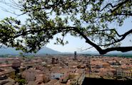 Torre Guinigi, Lucca