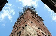 Lucca - Guinigi Tower