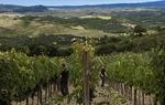Castello di Velona Resort, Thermal SPA and Winery