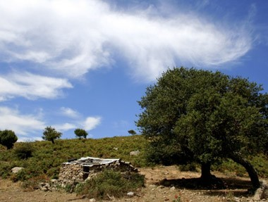 aritzo-sardinia3.jpg